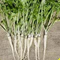 Everwilde Farms - Hamburg Rooted Parsley Seeds - Gold Vault