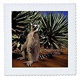 3dRose qs_72886_3 Madagascar, Berenty Private