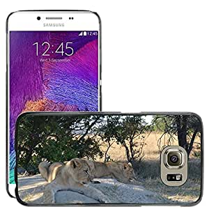 Hot Style Cell Phone PC Hard Case Cover // M00112443 Lions Rocks Animals Africa Wildlife // Samsung Galaxy S6 (Not Fits S6 EDGE)