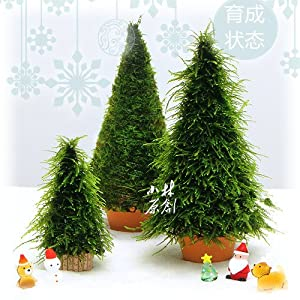 2pcs hand made high simulation moss christmas tree plant grow landscape ada water plant fish aquarium tank - What Do You Put In Christmas Tree Water