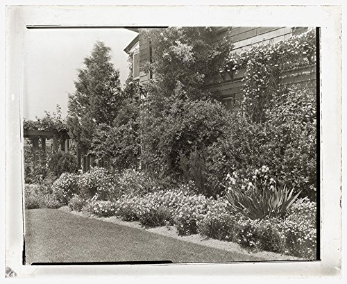 (Alicon, Charles Hinman Graves house, 2310 Garden Street, Santa Barbara, California. Flower)
