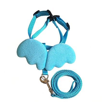 collares lindos de las correas del perro del animal ...