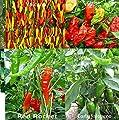 Hot Pepper Seed Mix 40 Seeds