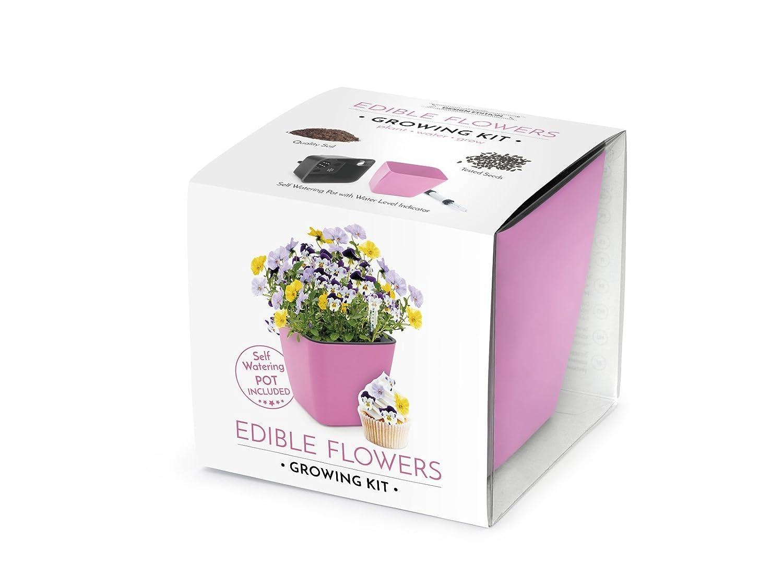 Set para el cultivo de flores comestibles (Edible flowers growing kit) Doméstico, set All-In-One, set con hidrojardinera, sustrato y semillas (Rosa) VISO TRADE