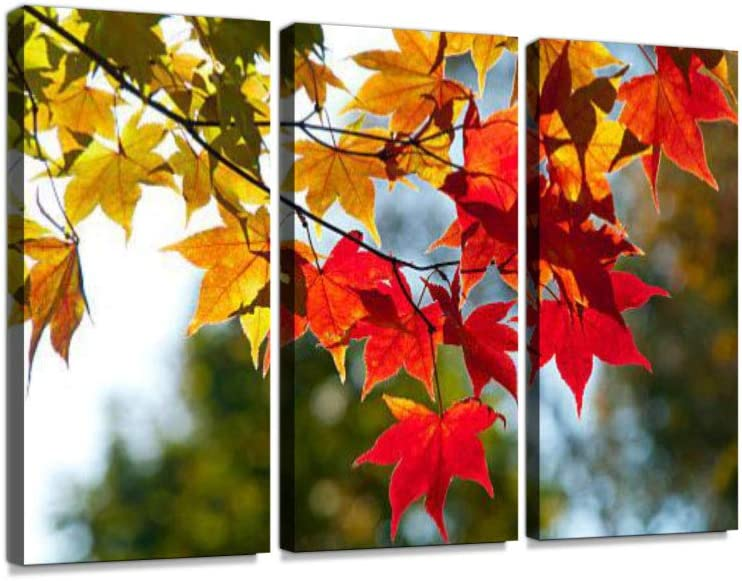 Amazon Com Autumn Leaves Which Turned Red And Yellow Print On Canvas Wall Artwork Modern Photography Home Decor Unique Pattern Stretched And Framed 3 Piece With Frame Posters Prints