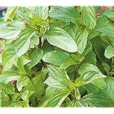 Herb Seeds - Peppermint - 20,000 Seeds