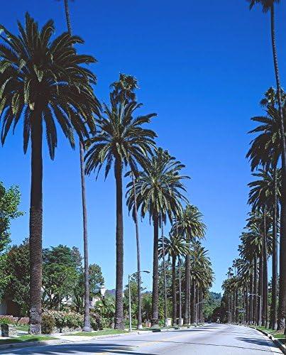 絵画風 壁紙ポスター (はがせるシール式) ロサンゼルス ビバリーヒルズ ヤシの木 カリフォルニア キャラクロ LOS-009S1 (585mm×726mm) 建築用壁紙+耐候性塗料