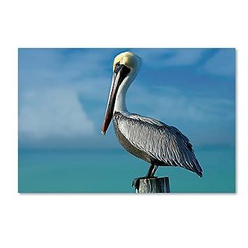 Amazon.com: Pelican by Mike Jones Photo, 22x32-Inch Canvas Wall Art ...