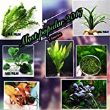 Live Aquarium Plants The Most Popular 2017 / 7 Species - Anacharis, Amazon Sword, Java Moss and more! by Mainam