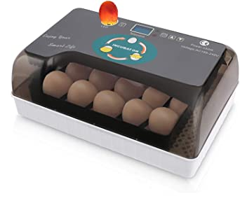 Incubatrice automatica a 12 uova Incubatrici con illuminazione a