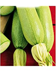 Semi Zucchino Bianco di Trieste - Cucurbita Pepo - Semi agricoli - Zucchine - Zi011-75 Sementi Circa