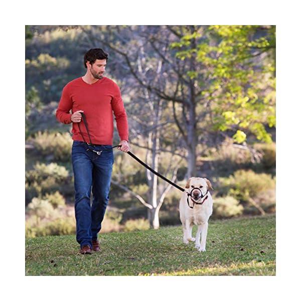 Company of Animals HALTI Training Lead 3