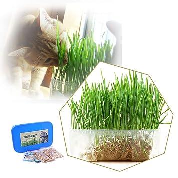 kakakooo Las Semillas de la Hierba del Gato Mini Kit Orgánica Hierba Mascotas Crecer la Hierba