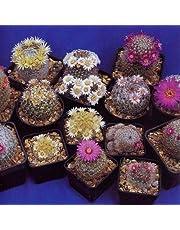Tropica - cactus - mélange Mammilaria - 100 graines