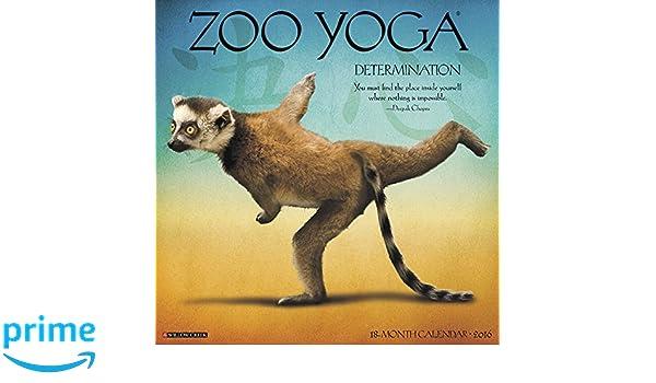 Zoo Yoga 2016 Calendar: Amazon.es: Willow Creek Press ...