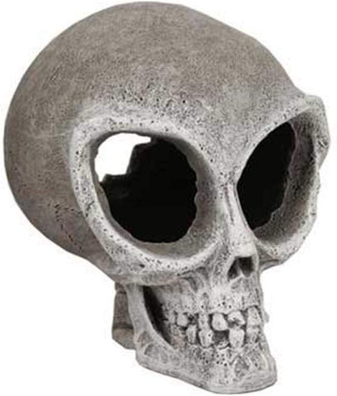 Blue Ribbon Exotic Environments Skull