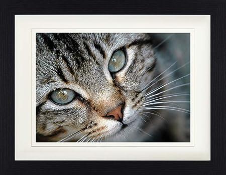 1art1 Gatos - Pequeño Gato Tigrado Póster De Colección Enmarcado ...