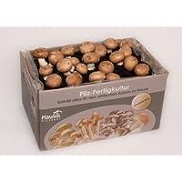 Steinchampignon Pilzkultur - Pilze zum selber züchten - ohne Vorkentnisse