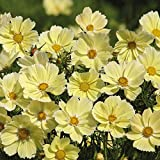 Xanthos Cosmo Seeds - 10+ Rare Seeds + FREE Bonus 6 Variety Seed Pack - a $29.95 Value! Packed in FROZEN SEED CAPSULES for Growing Seeds Now or Saving Seeds for Years