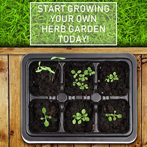 KORAM Herb Garden Kit Growing Kit Gardening Starter Set- 10 Herbs Grow from Organic Seeds Indoor Herb Kit with Everything a Gardener Needs for Growing Herbs Indoors, Kitchen, Balcony, Window Sill by KORAM (Image #4)