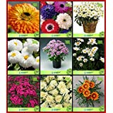 BloomGreen Co. Seeds India Combo Flower Seeds: Calendula- Mixed, Dasiya-Pomp Mixed, Daisy-Pomp, Daisy-Monstrose, Dianthus-Baby Doll, Dimorphothica-White, Dianthus- Red, Dianthus- Dwarf, Gazania Terrace Gardening