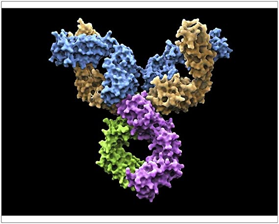 Impresión fotográfica de moléculas de anticuerpos ...