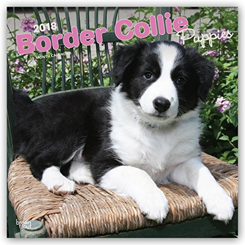 Border Collie Puppies 2018 12 x 12 Inch Monthly Square Wall Calendar, Animals Dog Breeds Collie Puppies (Multilingual Edition) ()