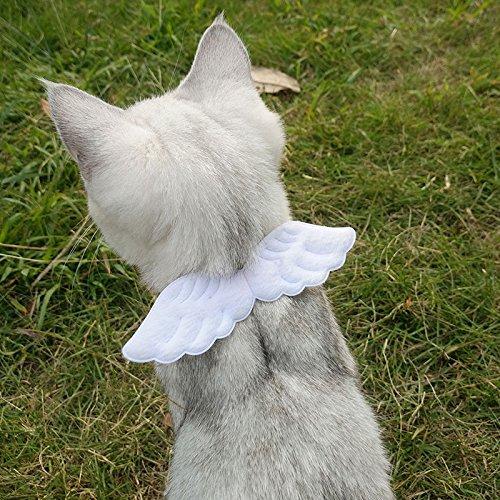 HYCWM Pet Cap Medium Sized Dog Big Dog Baseball Cap Golden Hair Hash Alaska Pet Dog Sun Hat S White Wings