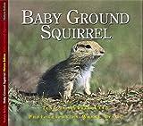 Baby Ground Squirrel, Aubrey Lang, 1550417991