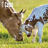 Cows 2018 12 x 12 Inch Monthly Square Wall Calendar, Domestic Farm Animals (English, French and Spanish Edition)