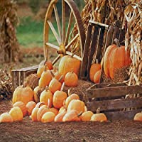 GladsBuy Pumpkins 10 x 10 Computer Printed Photography Backdrop Autumn Theme Background S-1989