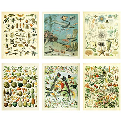 (Meishe Art Vintage Poster Print Biology Botanical Science Fruit Flowers Blooming Floral Wall Decor Fishes Deep Sea Creature Animals Vegetables Insects Birds Breeds Species Identification Set of 6pcs)