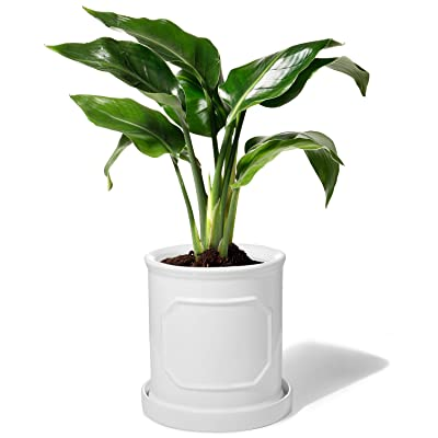 POTEY 050201 Cylinder Ceramic Pots for Plants - 6 inch White Planters for Indoor Plants Flower with Drainage Hole & Saucer : Garden & Outdoor