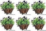 Panacea Products 83545 14'' Quatrefoil Square Planter w Coco Liner - Quantity 6