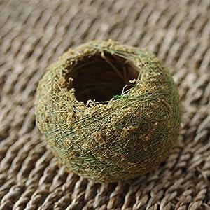Nyalex Natural Moss Ball BONSAI Green Sphagnum Moss Substrate Moss Bonsai Decorative Flowers & Wreaths For Garden House Balcony 1