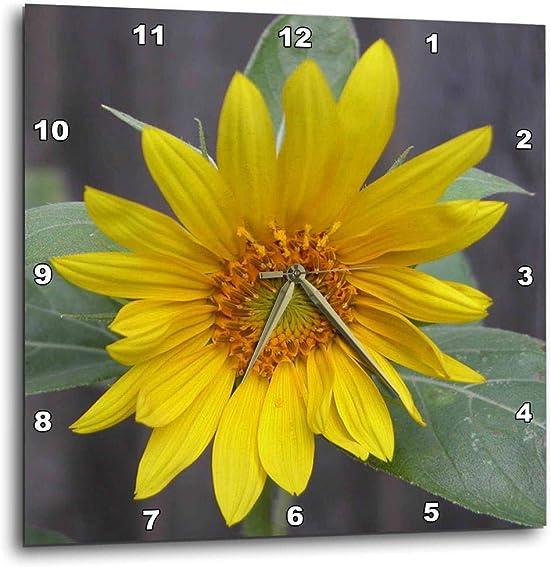 3dRose DPP_11851_1 Sunflower Wall Clock, 10 by 10