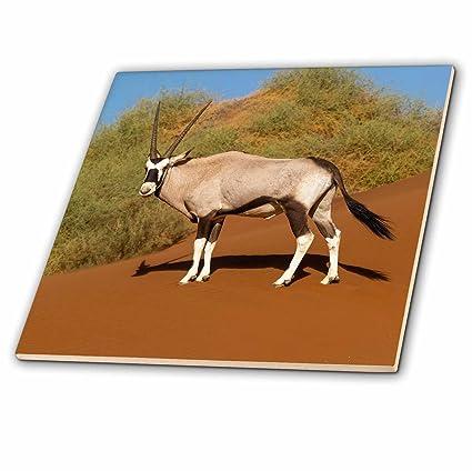 Amazon com: 3dRose Danita Delimont - Animals - Namibia