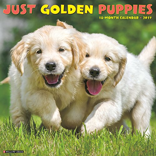 Just Golden Puppies 2017 Wall Calendar (Dog Breed Calendars)