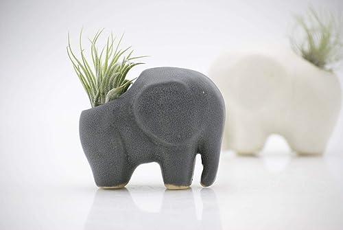 Air plant holder elephant, Small Air Plant Pot Ceramic Tillandsia Holder