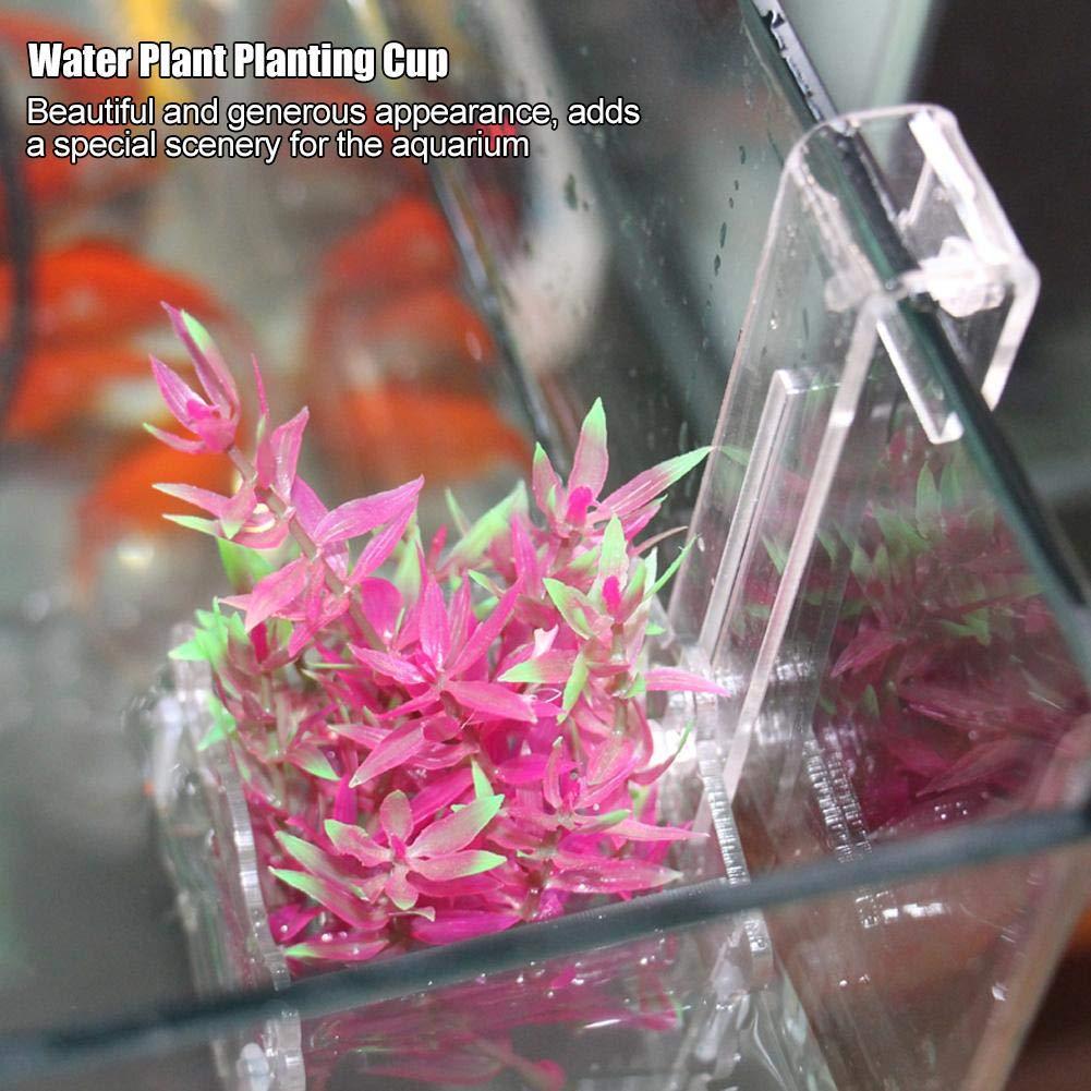 Hffheer Acquario Erba Fioriera Vetro Acrilico Cristallo Pianta acquatica Portabicchieri Serbatoio per Pesci Piante acquatiche Vaso per Piante acquatiche in Vaso con Ventose