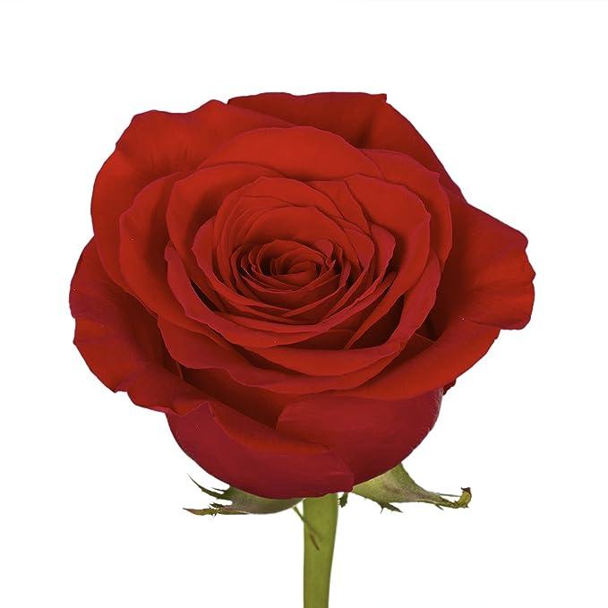 Amazon.com: GlobalRose - Rosas rojas para el día de San ...