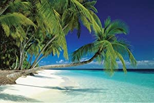 "Wall Posters Maldives Poster 24"" X 36"" Beach Palm Tree #ST4158"