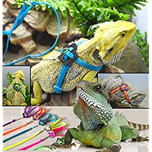 L Adjustable Lizard Harness Leash - Multi Color Light Soft Fashion for Small Reptiles Pets Small Animal Nylon Leash(Black 8