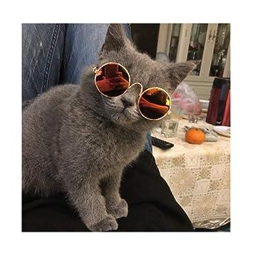 YOCC Gafas de Sol para Mascotas y Fotos de Mascotas ...