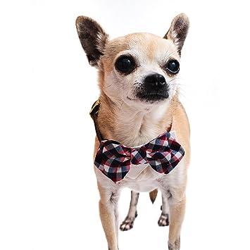 Tail Trends - Corbata para Perro con diseño de Lazo, Ideal para ...
