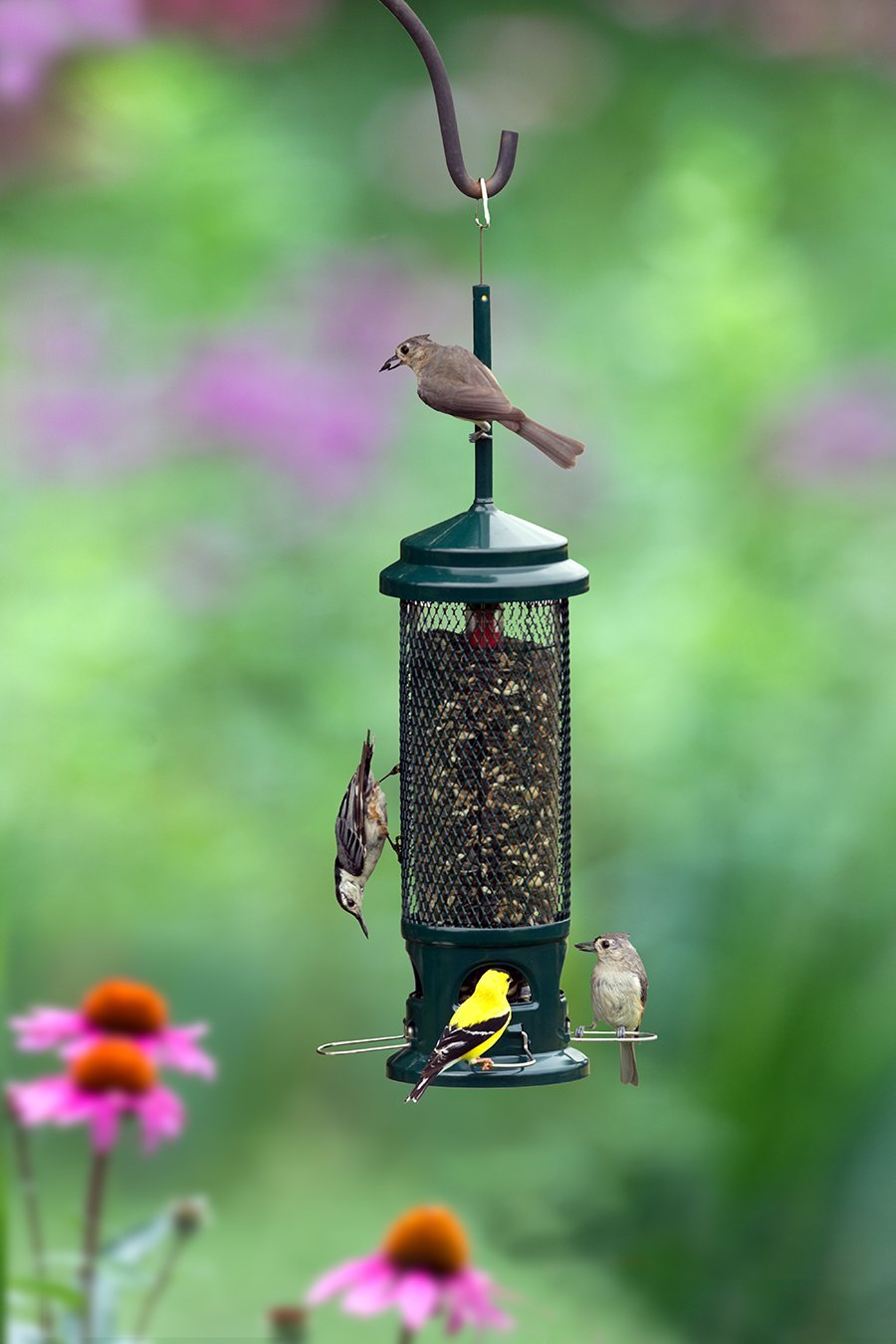 feeder in with choice squirrel brome green baffle classic birds bird proof house built and pole