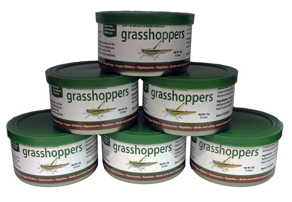 Canned Grasshoppers (1.2 oz. 6 Pack) - Healthy High Protein Insect Treat - Hedgehogs, Sugar Gliders, Reptiles, Wild Birds, Chickens, Lizards, Bearded Dragons, Skunks, Opossums, Fish, Amphibians by Exotic Nutrition
