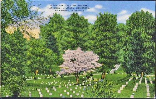 Dogwood Tree In Bloom (National Military Cemetery) (Vicksburg Mississippi Postcard) ()
