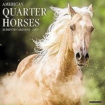 American Quarter Horses 2019 Wall Calendar