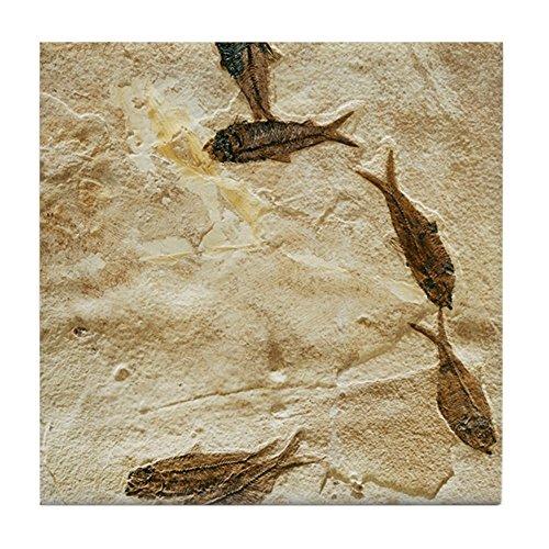 CafePress - Fish Fossils - Tile Coaster, Drink Coaster, Small - Knightia Fish